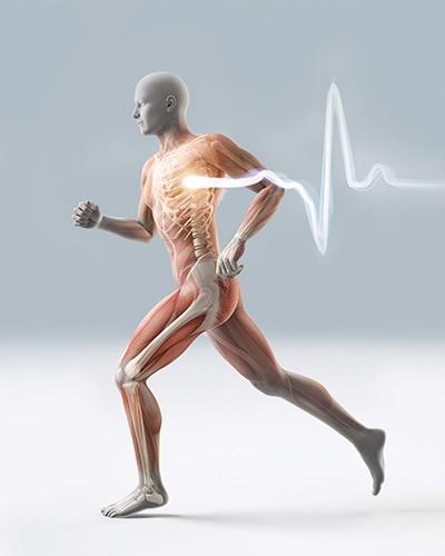 Alles in Bewegung – unser Körper, einfach zum Staunen