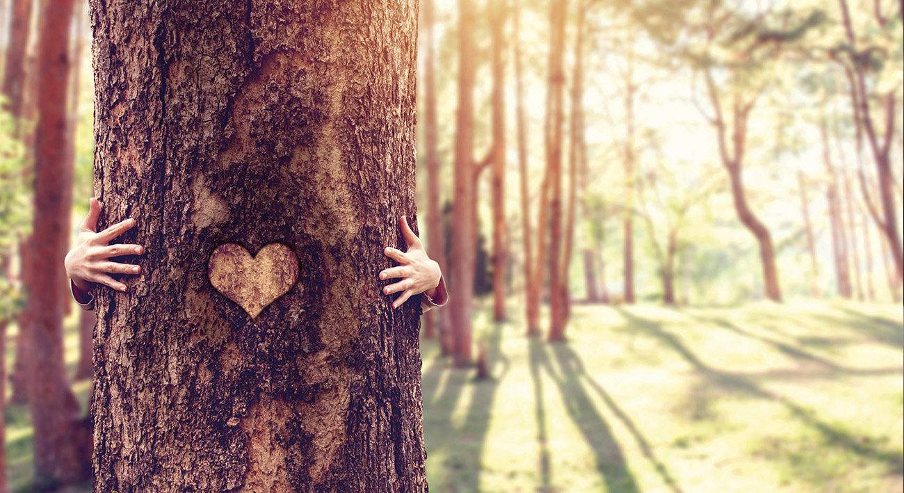 Waldluft – Die Heilkraft der Bäume