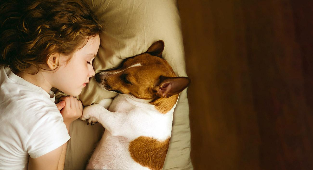 Warum wir Schlaf brauchen